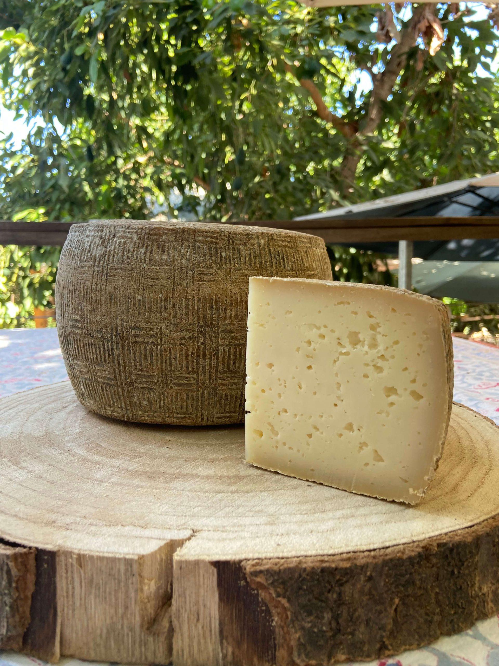 גבינת פיקורנו מחלב כבשים